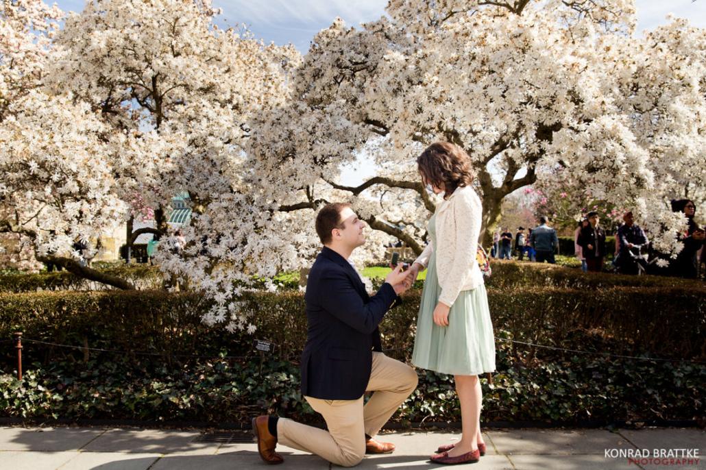 Brooklyn Botanic Garden Proposal
